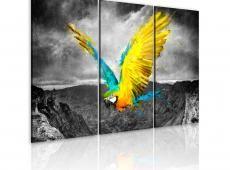 Kép - Bird-of-paradicsom