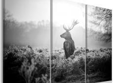 Kép - Black and White Deer I