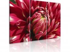 Kép - Blooming garden- dahlia