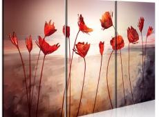 Kép - Bright red poppies