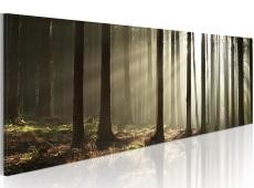 Kép - Canvas print - Morning in the woods