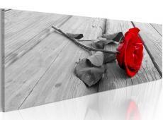 Kép - Carmine rose