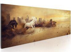 Kép - City of stallions