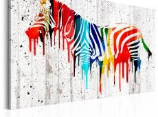 Kép - Colourful Zebra