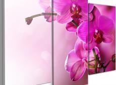 Kép - Dark pink orchid