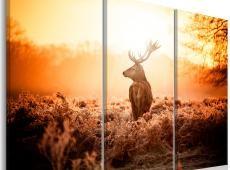 Kép - Deer in the Sun I