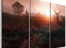 Kép - Deer in the Sunshine I