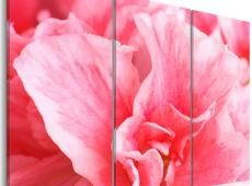 Kép - Delicate azalia flower