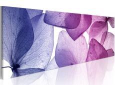 Kép - Delicate petals