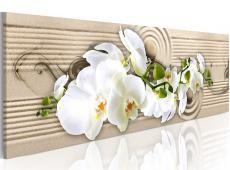 Kép - Desert Flower