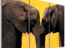 Kép - Elephant kiss
