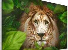 Kép - Eyes of the jungle