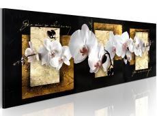 Kép - Finessed kompozíció orchidea
