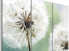 Kép - Fluffy dandelions