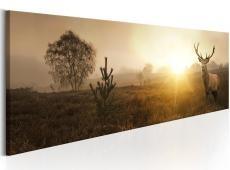 Kép - Foggy Morning
