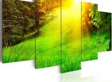 Kép - Forest and sun