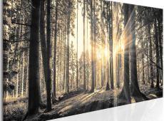 Kép - Forest Sun