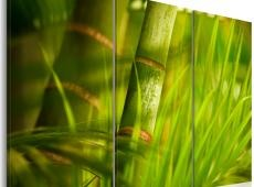 Kép - Fresh green tropical grass