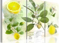 Kép - Fruit: lemon