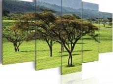 Kép - Green Africa
