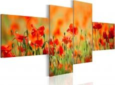 Kép - Joyful poppy meadow