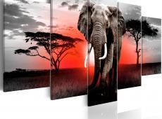 Kép - Lonely Elephant