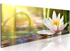 Kép - Lotus' Glow