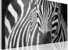 Kép - Mrs. Zebra