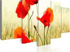 Kép - Nature and red poppies