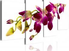Kép - Orchid izzás