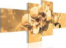 Kép - Orchideák a szépia