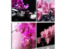 Kép - Orchideák szebb, mint valaha