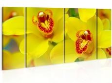 Kép - Orchids - intensity of yellow color