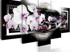 Kép - Orchids on a black background