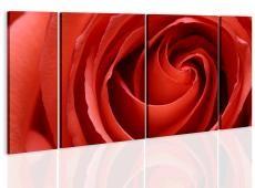 Kép - Passionate rose