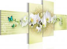 Kép - Pastel orchid