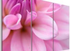 Kép - Pink dália
