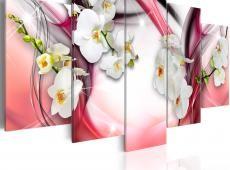 Kép - Pink Melody