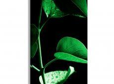Kép - Plant in Black (1 Part) Vertical