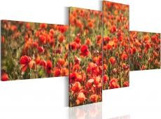 Kép - Poppies everywhere!