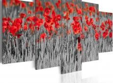 Kép - Poppies in the grain