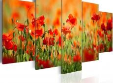 Kép - Poppies in vivid colors