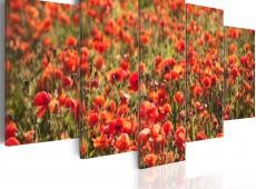 Kép - Red poppies on green meadow