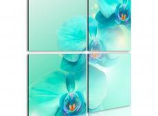 Kép - Sky-kék orchideák