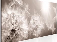 Kép - Summer Dandelions