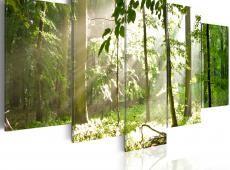 Kép - Sunbeam a fák között