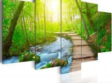 Kép - Sunny Forest