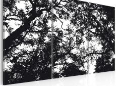 Kép - Sűrű erdő