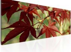 Kép - Színes őszi
