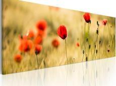Kép - Tavaszi rét pipacsok